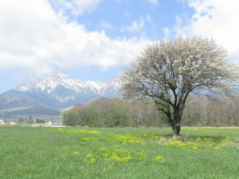 野辺山ヤマナシ.jpg